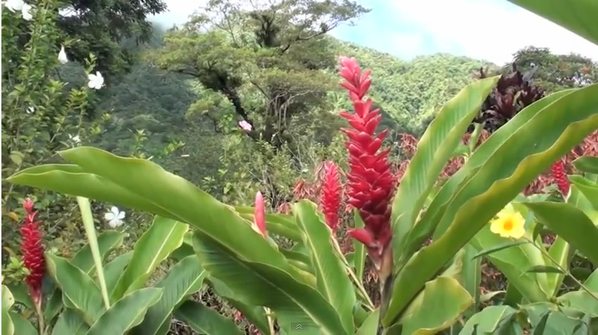 5 incredible photos from the garden of eden in saint vincent and the garden of eden in saint vincent and the grenadines publicscrutiny Image collections